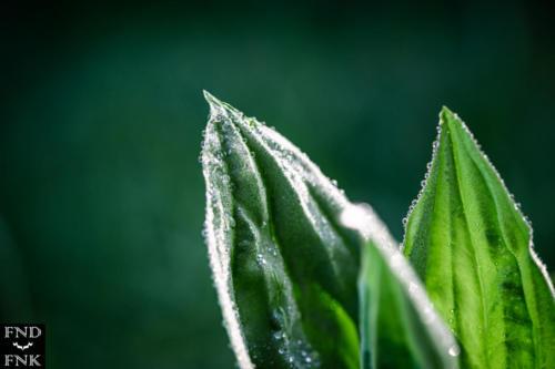 Photographie nature franck fernandez col de chioula