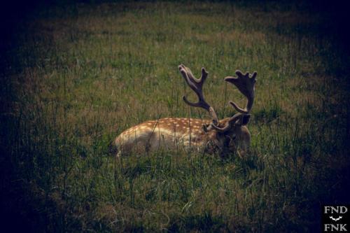 Jardin des Martels, toulouse tourisme nature photographie