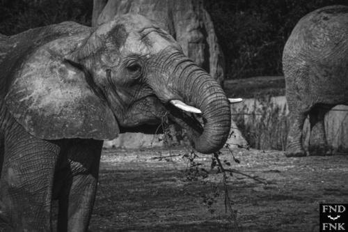 Photographe toulouse zoo plaisance du touch tourisme